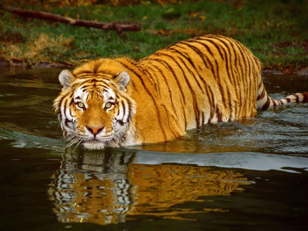 Honeymoon-destination-India-Sundarbans